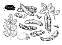Carob vector superfood drawing set. hand drawn illustr stock illustration