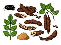 Free Carob Vector Superfood Drawing Set. Isolated Hand Drawn Stock Photography - 113737562