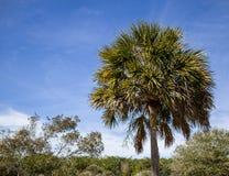 Carolina Blue Royalty Free Stock Photo