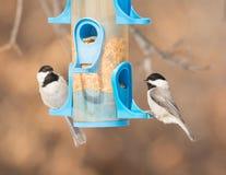 Carolina Chickadees no alimentador do pássaro fotos de stock royalty free