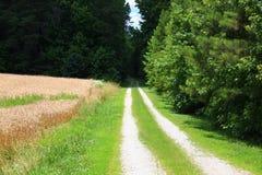 Carolina Country Road Immagine Stock