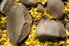 Carolina Jasmine em rochas fotografia de stock royalty free