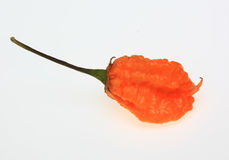 Carolina Reaper Chili, chili pepper, Capsicum annuum. Yellow Carolina Reaper Chili, chili pepper, Capsicum annuum Royalty Free Stock Photography