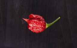 Carolina Reaper strong hot pepper Royalty Free Stock Images