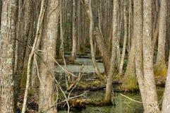 carolina södra swamp fotografering för bildbyråer
