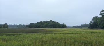 Carolina Salt Marsh del norte Imagen de archivo libre de regalías
