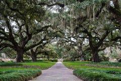 Carolina Spring Royalty Free Stock Images