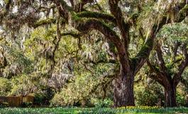 Carolina Spring Lizenzfreies Stockbild