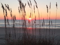 Carolina Sunrise. Beach grass silhouetted against the morning sky in South Carolina Royalty Free Stock Images