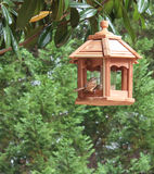 Carolina Wren on bird feeder Royalty Free Stock Image