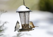 Two songbirds on snow covered bird seed feeder, Georgia, USA Stock Photography