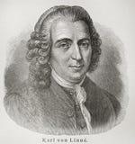 Carolus Linnaeus Imagen de archivo libre de regalías
