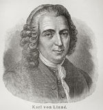 Carolus Linnaeus Royalty Free Stock Image