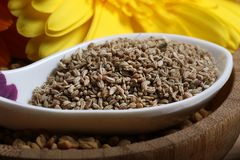 Carom seeds. Beautiful shot of carom seeds in spoon stock photos