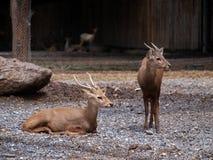 2 caros ainda têm a vida no jardim zoológico Foto de Stock