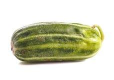黄瓜carosello 图库摄影