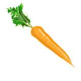 carota Immagine Stock Libera da Diritti