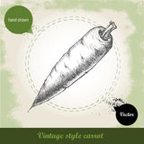 Carota disegnata a mano Fondo di verdure dell'alimento di eco organico Fotografie Stock Libere da Diritti