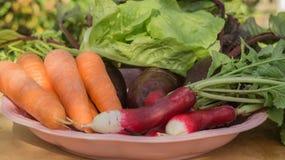 Carota organica fresca, insalata, ravanello, barbabietola con le foglie verdi in piatto su fondo di legno Immagine Stock Libera da Diritti
