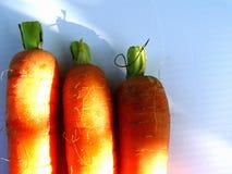 carote Immagine Stock