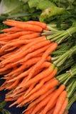 Carote di bambino arancio organiche fresche e dolci immagine stock