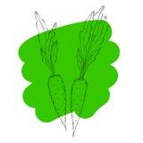Carote disegnate a mano Fondo di verdure dell'alimento di eco organico Illustrazione di stile di schizzo di vettore Fotografia Stock