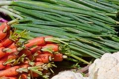 Carote e cipolle verdi Immagine Stock