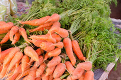 carote fresche da vendere al mercato locale degli agricoltori Immagini Stock