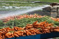 Carote fresche dall'azienda agricola Fotografia Stock Libera da Diritti