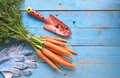 Carote fresche, strumenti di giardinaggio Immagini Stock