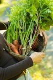 carote, parsleys e barbabietole in un canestro Fotografie Stock
