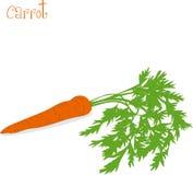 Carotte, illustrations Photo libre de droits