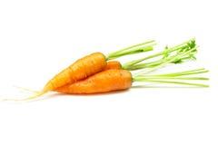 Carottes, carottes de bébé Image stock