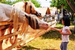 Carottes de alimentation d'une fille aux chevaux à une ferme en Thaïlande images libres de droits