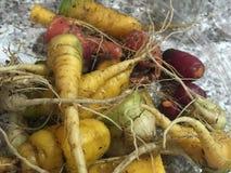 Carottes de carottes Photographie stock libre de droits