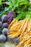 Carottes et betteraves néerlandaises fraîches sur le marché local d'agriculteurs Photos stock