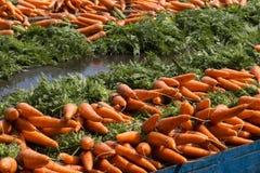 Carottes fraîches de la ferme Image stock