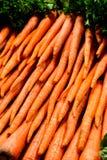 Carottes fraîches Photo libre de droits