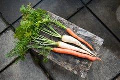 Carottes oranges et blanches fraîchement sélectionnées, panais Image stock