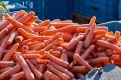 Carottes Raccords en caoutchouc organiques frais Caisses du marché de fond dans le bleu Photo stock