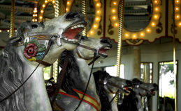 Carousel Horses - Heads in Row Stock Images