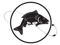 Carp. The figure shows a carp fish Royalty Free Stock Image