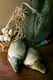 Carp. Still life with fresh carp on table royalty free stock photos