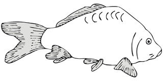 Carp. Art illustration of a carp Stock Photo