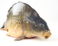 Carp Stock Photos