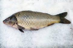 Carp. On fish market royalty free stock photos