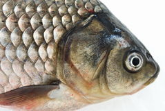 Carp. Head carp close-up, isolated on white background Stock Photos