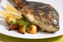 Carp baked Stock Images