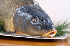 Carp and Christmas Royalty Free Stock Image