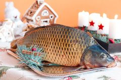 Carp and Christmas Royalty Free Stock Images